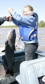 V Catfish